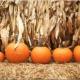 PUMPKIN PATCH AT PINTO'S FARM