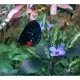 First Magnitude beer launch Nov. 1 supports butterfly conservation