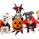 Howl-O-Ween Pet Costume Contest - MacArthur