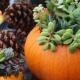 'Sip and Succulents' Succulent Pumpkin Workshop