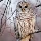 NIGHT WALK: Owl Prowl