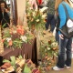 Colorado Country Christmas Gift Show - Colorado Springs