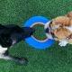Pet Paradise Tallahassee Puppy Social