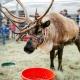 Reindeer Magic Returns to Dennis' 7 Dees Lake Oswego