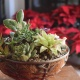 Winter Succulent Arrangement Workshop