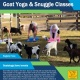 Goat Yoga at Black Prong