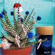 Workshop: Holiday Succulents