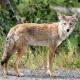 EcoTalk: Urban Wildlife