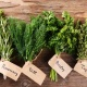 Growing Herbs in Pinellas County