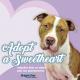Adopt A Sweetheart