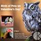 Birds of Prey on Valentine's Day