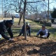 MLK, JR. Day of Service Project: Boone Square