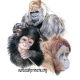 Winter Wonderland at Suncoast Primate Sanctuary