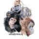 Suncoast Primate Sanctuary will open Monday, 1/18/21!