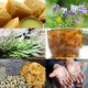 Herbal Medicine For Professionals - Winter 2019