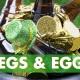 Kegs & Eggs at Jacksonville