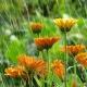 Save the Rain: Rain Barrel Workshop