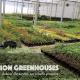 Production Greenhouse Tour - 9:30am