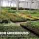 Production Greenhouse Tour - 3:30PM