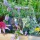 Herb Garden Harvest