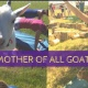 GOATS & YOGA- Saturday, July 13th