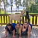 Goat Yoga Tampa plus free drink!