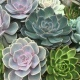 Succulent Make and Take at Central 28
