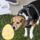 Easter Egg Hunt Play Dates (Long Beach)