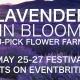 U-Pick Lavender Festival