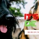 P&F Pet Friendly Cinco De Mayo
