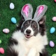 Dog Easter Egg Hunt