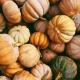 Pumpkin Bash To Go