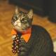 Howl-O-Ween Pet Photos