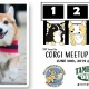 2019 Tampa Bay Corgi Meetup Races