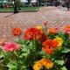 May 21st Rotunda Farmers Market