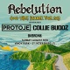 Rebelution: Good Vibes Summer Tour