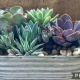 Upcycled Succulent Planters @ Barrier Island Sanctuary