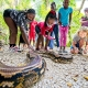 Giant Snakes of the World