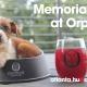 Memorial Day at Orpheus Brewing