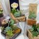 Father's Day Succulent Cigar Box Garden