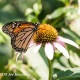 10th Annual Butterfly Day at DeKorte Park