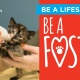 Be a Foster Event