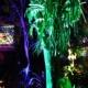 Night Lights in the Naples Botanical Garden