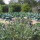 """The Abundant Fall Vegetable Garden"" Seasonal vegetable cooking demonstration included"