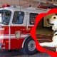 Firetruck and Cinder the Arson Dog visit!