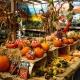 Halloween Pet Pictures at Pet Supermarket!