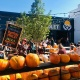 Denver Beer Co Arvada's Pumpkin Patch + Painting Party