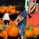 Fall Pumpkin Fest
