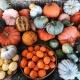 Dallas' Original Pumpkin Festival