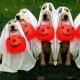 Barks & Boos!